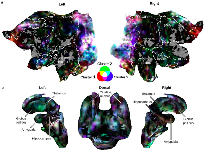 "Recently accepted: ""Distributed affective space represents multiple emotion categories across the human brain"""